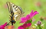 Бисероплетение- чудеса творения