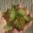 Орхидея Лето Золотое2